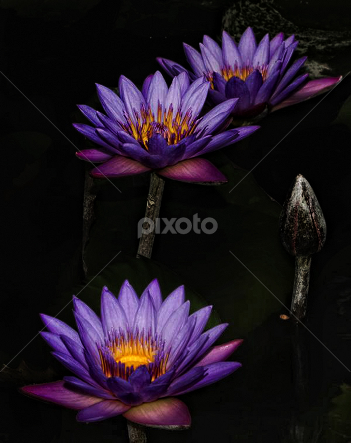 by Indratno Agus - Nature Up Close Flowers - 2011-2013