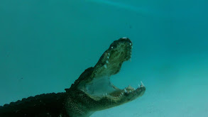 Paint You Later, Alligator thumbnail