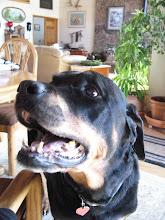 Photo: Oli, loving his massage (and treats)!