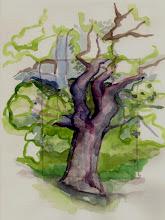 Photo: 1999 Oak at Talieson. Spring Green, WI. Watercolor.