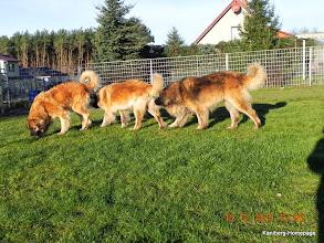 Photo: von links Lolle, Gina & Lasse - man kann auch sagen Mama mit ihren Kindern