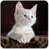 CAT LOVER WALLPAPERS