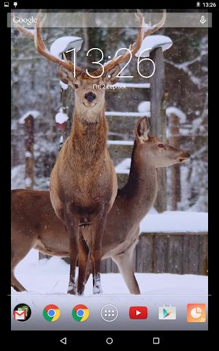 Winter Deer Video Live Wallpaper App