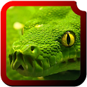 Reptiles HD  Wallpapers icon