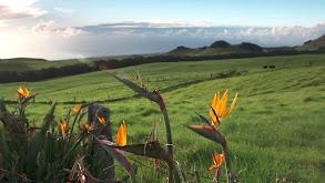 Hawaii's Big Island: Eyeballs and Abalone thumbnail