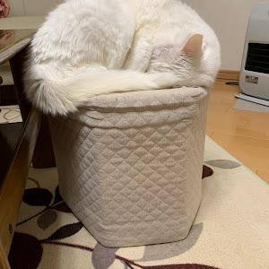 その他  平成18年式のカスタム事例画像 白猫。さんの2021年01月09日16:54の投稿