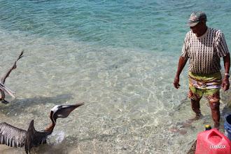 Photo: Pelícanos ya con el pescado en el buche