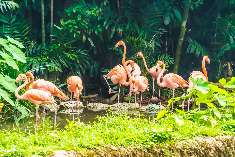 シンガポール動物園 フラミンゴ