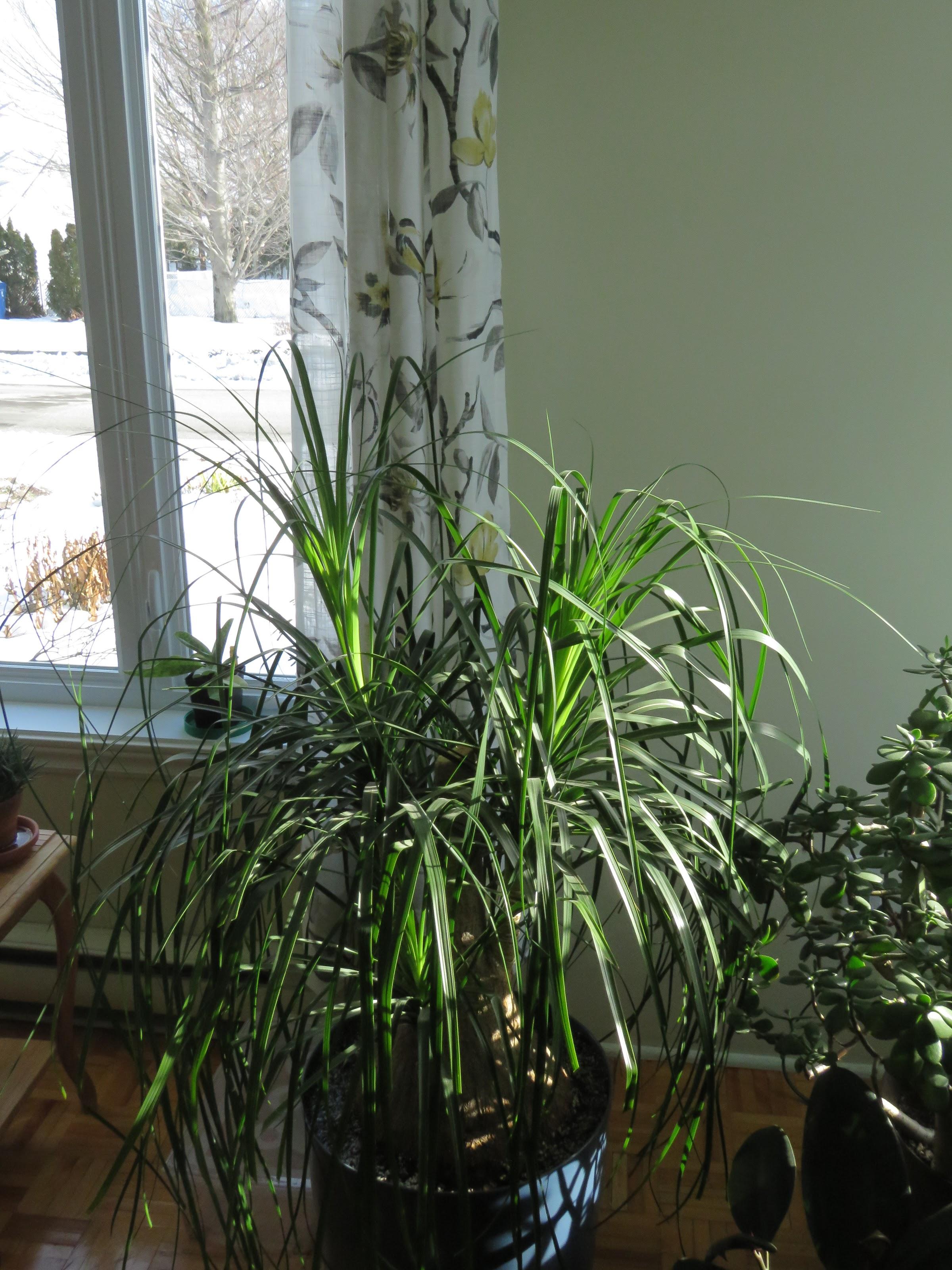 Autres plantes chez Grigri ZiF0_JCfwwrslEv-QgIF6ybczAckpgZdrl24Vier-rcsMoYtSS7JNP4Hc_9rlMEx0dkO_hb8E6ynH-EVFbr7vyH2uxRzGOOo9gzYO0buO7MrQ4_z-fv6TahGIyJODjzXCUctzKpAMYw=w2400