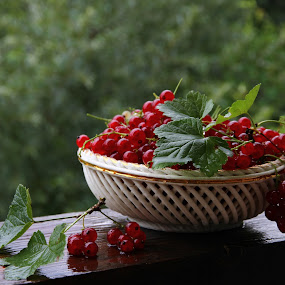 Red currant by Tatyana Obuhova - Nature Up Close Gardens & Produce