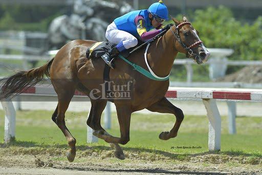 Salta Alto (Señor Candy) gana Condicional (1400m-Arena-PAL). - Staff ElTurf.com