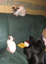 Photo: Sinjo is toch veel interessanter