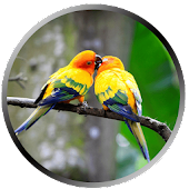 Lovers Parrot Wallpapers