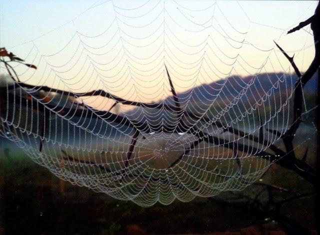 Not Charlotte's Web