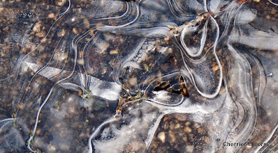 Photo: Ribbon ice in GM parking lot