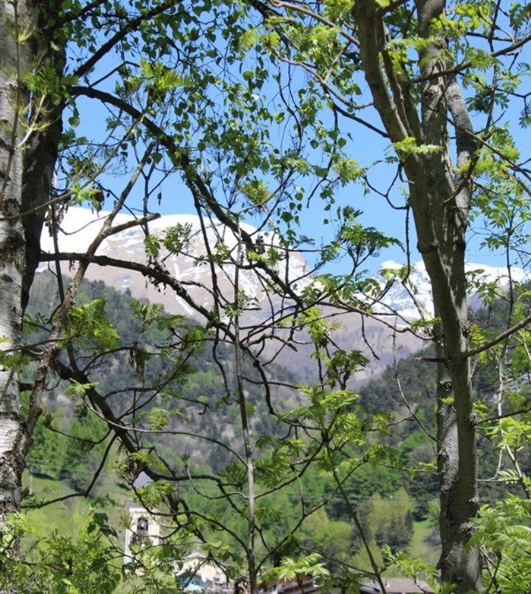 Among the trees di Eziomalesan