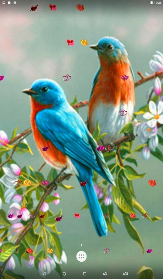 Love Birds Live Wallpaper Android Apps on Google Play