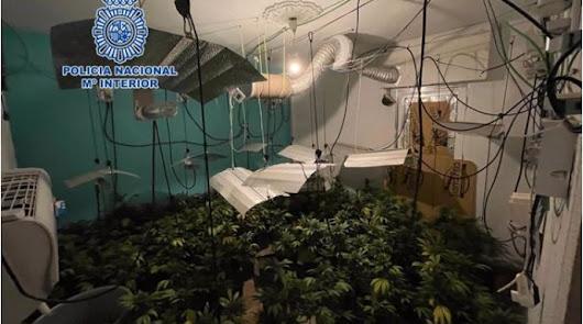 Cuatro detenidos por dos cultivos de marihuana en viviendas de protección