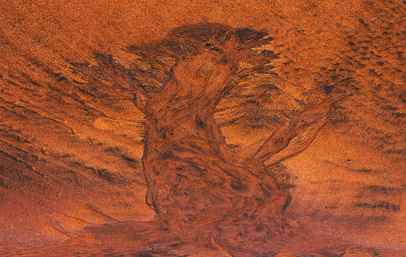 Sand tree di SG67