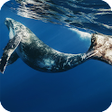 Whale Live Wallpaper Animal icon