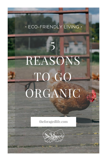 5 Reasons to go Organic | Organic is better for you and better for the planet. If you need convincing, I've got 5 reasons to show you why it is better to choose organic when you can | Living with Nature by The Foraged Life