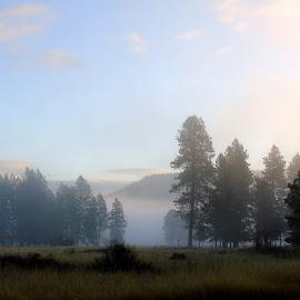 MIST IN THE MORNING by Cynthia Dodd - Novices Only Landscapes ( haze, sky, fog, outdoors, trees, landscape, misty, fields, mist )