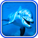 Dolphin Live Wallpaper icon