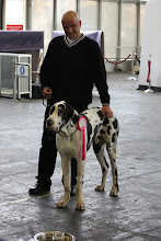 Photo: Amsterdam Winner Show 2011 - Rock 'n' Roll 1st, VP, Best Puppy :)