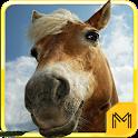 Horse Breeds & Pony Quiz HD icon