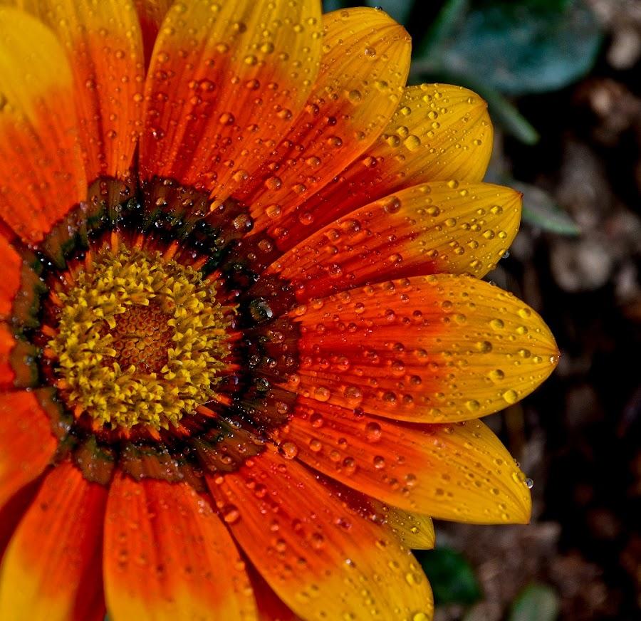 nana fvgb0.;' by Navin Khakha - Nature Up Close Flowers - 2011-2013