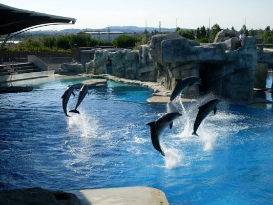 Delfini di bibou