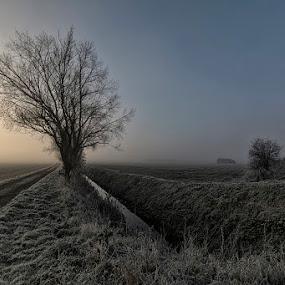 Misty morning by David Feuerhelm - Landscapes Sunsets & Sunrises ( frost, tree, misty, landscape, morning )