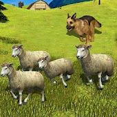 Sheep Shephered Dog Simulator