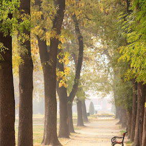 Skopje city park by Emil Chuchkov - City,  Street & Park  City Parks ( cuckove canon sigma skopje )