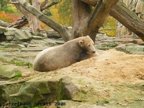 Photo: Knut hat ein noch netteres Plaetzchen gefunden ;-)