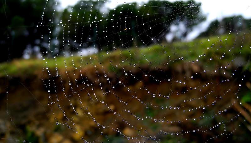 spider silk di utente cancellato