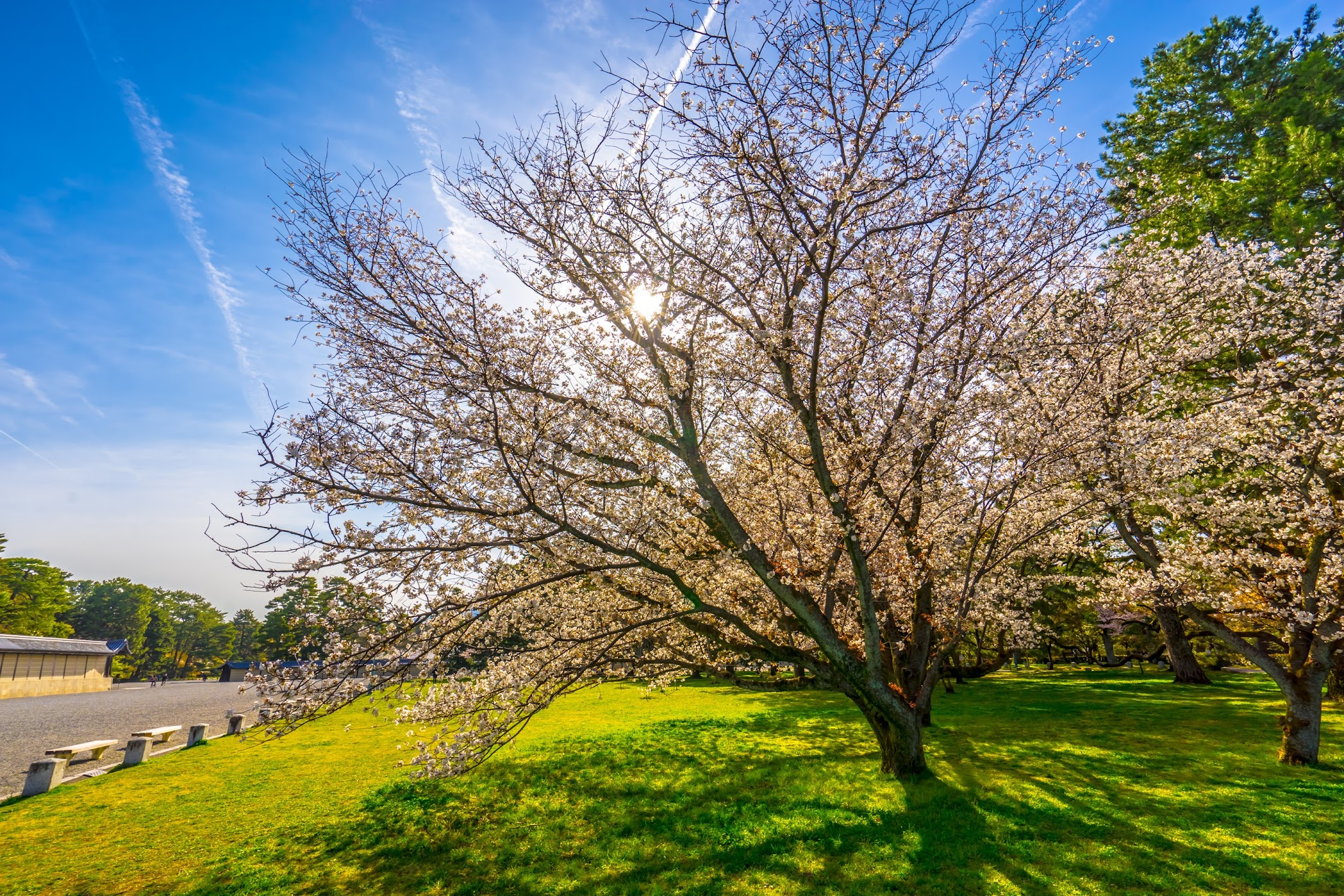 Kyoto gyoen Gakushuin cherry blossoms2
