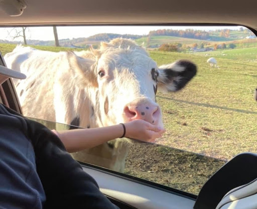 The Farm at Walnut Creek opens April 3 with Drive-thru or Wagon Rides