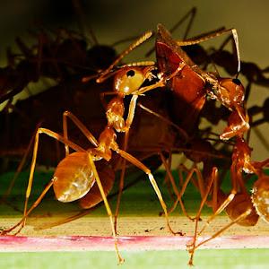 Ant's-pix.JPG