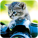 Cat Wallpapers 🐈 Icon