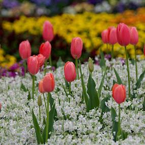 by Vino P - Flowers Flower Gardens