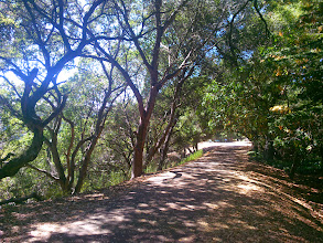 Photo: This is really a sweet stretch of trail here.