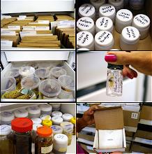 Photo: Detalhes das coleções de briófitas, estruturas reprodutivas de tipos, carpoteca, coleções de vias úmidas e de  fungos do HUEFS.