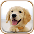 Cute Puppies Live Wallpaper apk