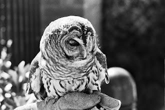 Photo: Owl