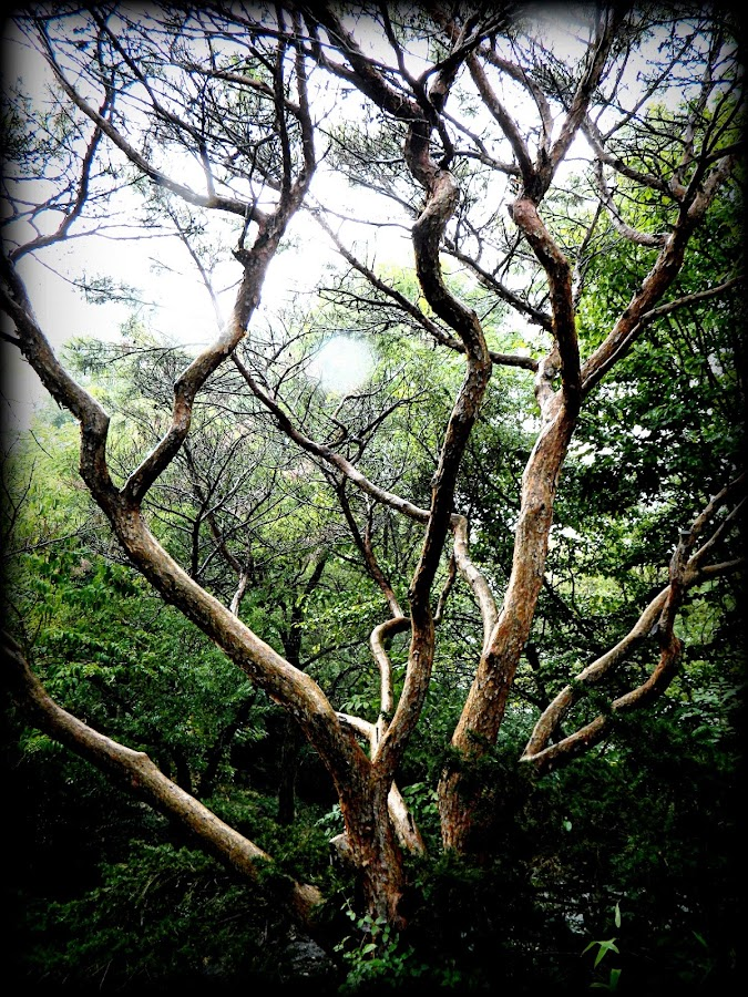 Life's Limbs by Jennifer Crouch - Nature Up Close Trees & Bushes
