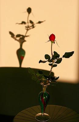 La rosa e l'ombra di @ngy