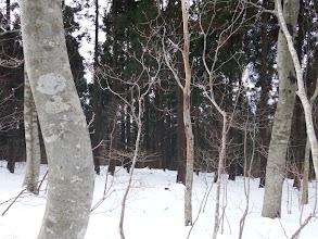 右に植林帯