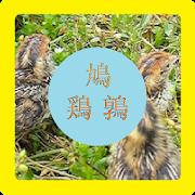 鳩と鶏と鶉