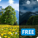 Summer Dandelion Live Wallpaper FREE icon